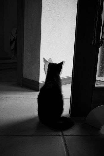 Observe . Domestic Cat Pets Domestic Animals One Animal Sitting Animal Themes Indoors  Door Feline Portrait Full Length Home Interior Black And White Photography Bnwpictures Black & White Photography Light Shadow Cat Pet Portraits Black And White Friday