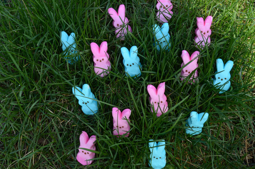 pink and blue marshmallow bunny peeps for Easter in green grass Blue Candy Day Easter Easter Bunny Easter Hunt Grass Marshmallows Nature No People Outdoors Peeps Pink Color Sweet Food
