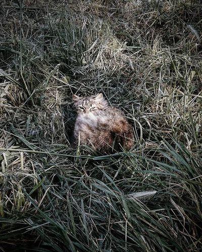 oh hello there. - - - Photography Photographer Dark Cat VSCO Nature Kärlek Grass Kitten Spring Sun Livefolk Folk Scandinavianliving Vscocam Analog Witch Witchcraft  Witchesofinstagram