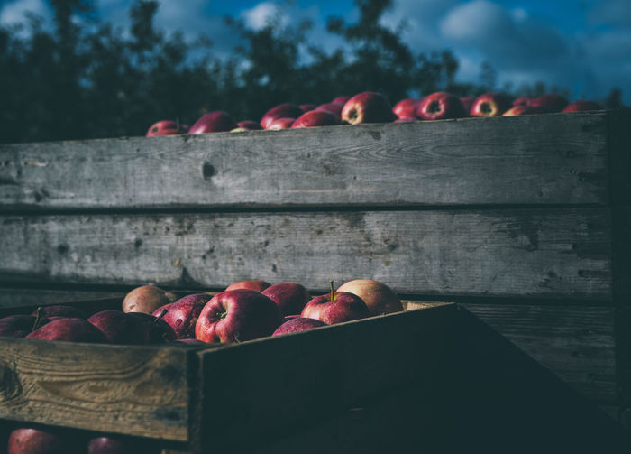 freshly harvested red apples stacked in a wooden box | daylight photography Harvest Season Apple - Fruit Apples Box Close-up Container Day Daylight Focus On Foreground Food Freshness Fruit Harvest Healthy Healthy Eating Large Group Of Objects Light And Shadow Nature No People Outdoors Red Wood - Material Wooden Box