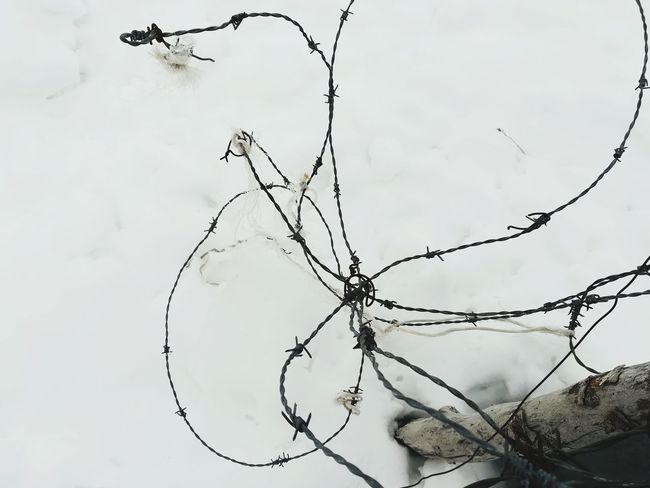 Manipulated Broken Metal Metallic Barbed Wire Caution Dangerous Danger Winter White Snow Outdoors No People Nature Day Close-up