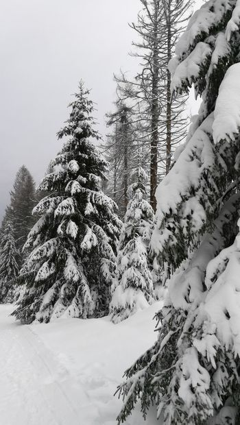 Snow Cold Temperature Winter Tree Mountain Sky Scenics Pine Tree Landscape Frozen Outdoors Forest Beauty In Nature Nature No People Day Growth Cold Spruce Tree Tranquility Tranquil Scene