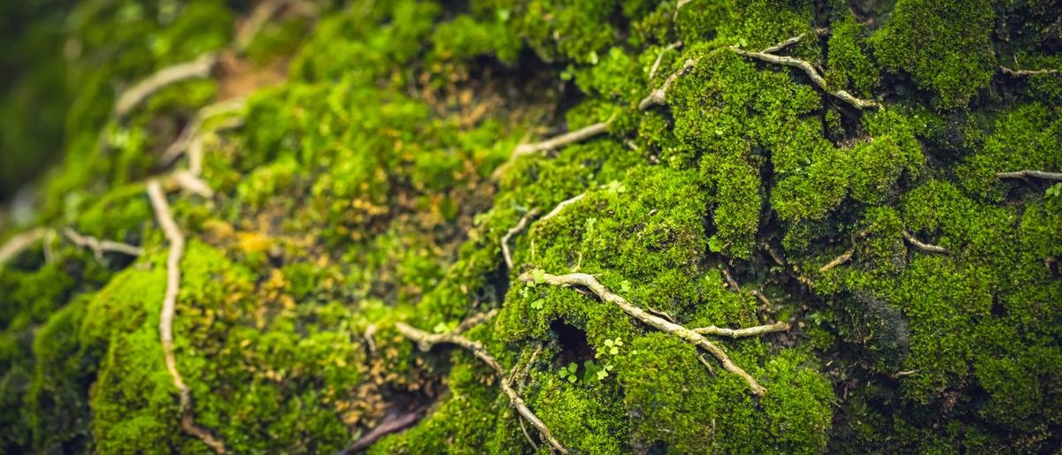 Close-up of moss covered tree