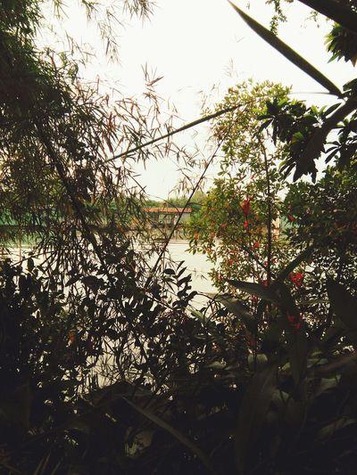 Beauty In Nature River Dong Nai River Life đồng Nai Water Tree Banyan Tree Cây Tre