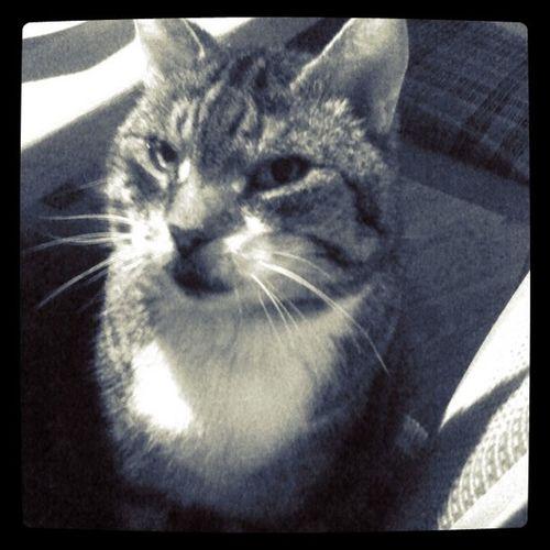 #firstshot #cat #teddy #iphone #instagram #tmbx Cat IPhone Teddy Instagram Instgram Firstshot Tmbx