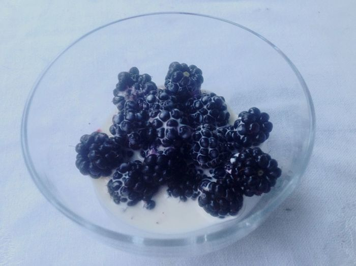 Autumns Coming The Fruits Of Our Labour blackberries.... Oh joy !!!!