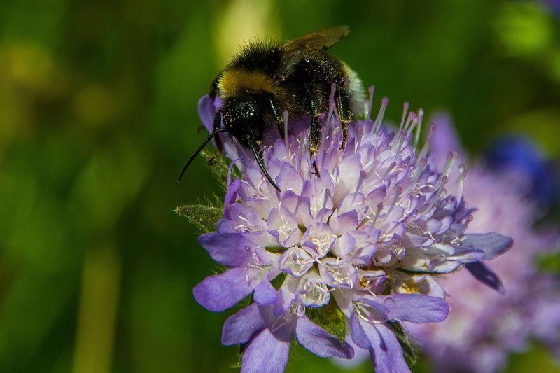 bumblebee EyeEm