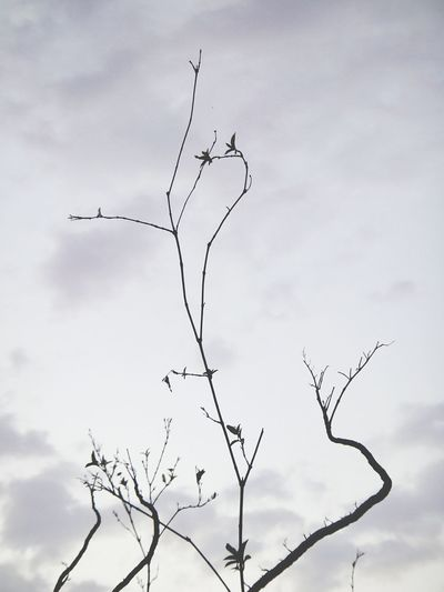 Barren Bird Animals In The Wild Flying Animal Wildlife Nature Flock Of Birds Animal Themes Branch Silhouette Outdoors Sky Bare Tree No People Tree Beauty In Nature Day