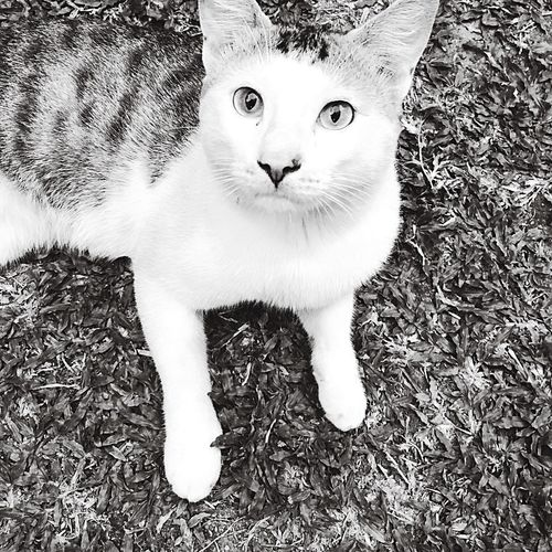Hello World cat black and white Taking Photos srilanka