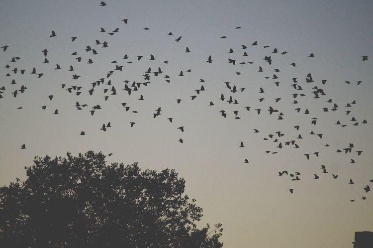 Birds Flyaway Freedom