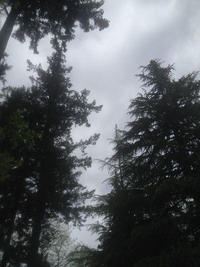 Trees Oregon The Purist (no Edit, No Filter)