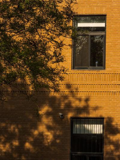 一层没有人,二层没有人,假日的傍晚,树荫上窗棂。 shadow Window Architecture Building Exterior Building Tree Wall House Evening