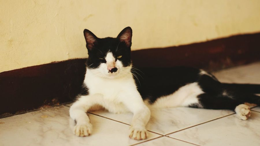 Portrait of cat relaxing on floor against wall