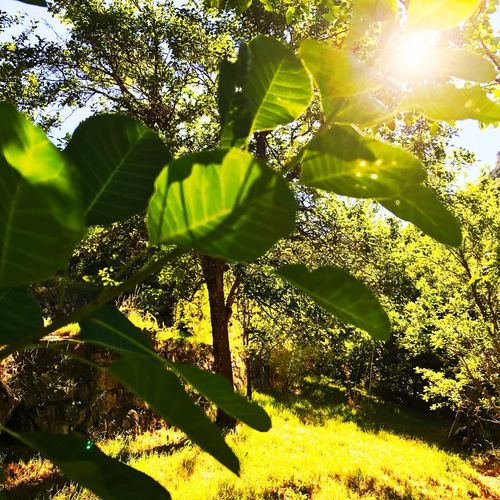 Nice Sunlight Growth Green Color Tree Nature Leaf Outdoors Day No People Sun Branch Shadow Beauty In Nature Close-up Freshness