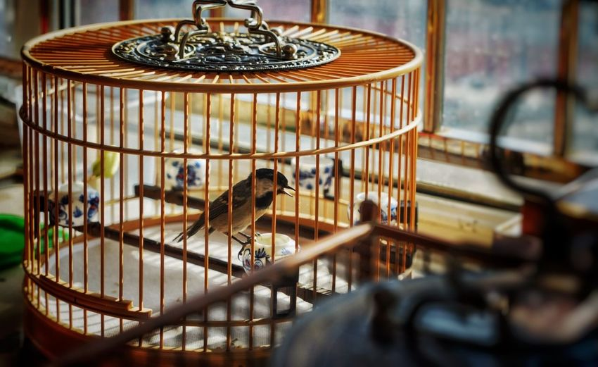Bird In Cage By Window