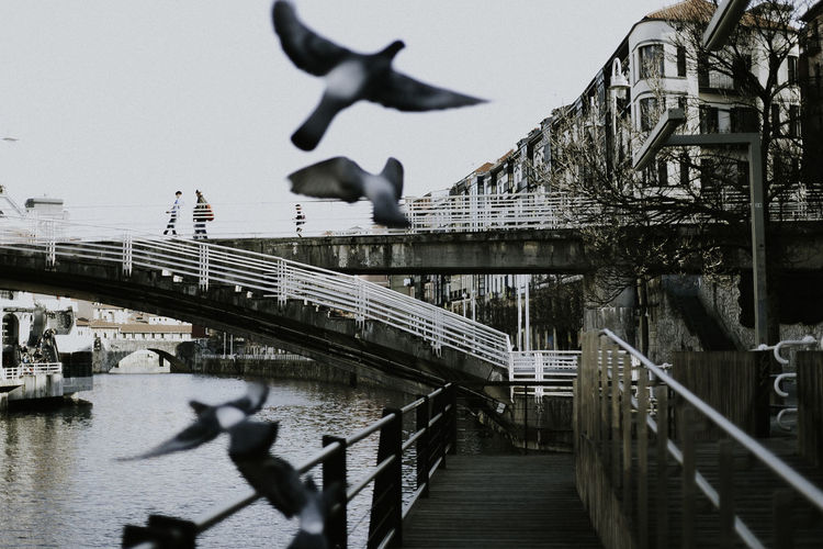 Animal Themes Animals In The Wild Architecture Architecture_collection Bird Bridge - Man Made Structure Building Exterior Built Structure City Clear Sky Day Flock Of Birds Flying Full Length Motion Nature One Animal Outdoors Railing Real People Sky Spread Wings Water Women Photographers