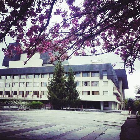 Ukraine Украина♥ Закарпатье ужгород Trees Flowers Trees Enjoying Life Sakura Драмтеатр