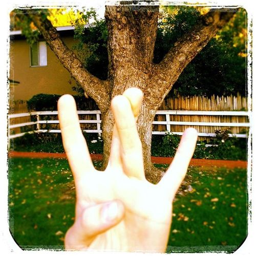 WestSide Tree Human Hand Tree Human Body Part Real People One Person Day Outdoors Architecture Close-up Adult People Sommergefühle