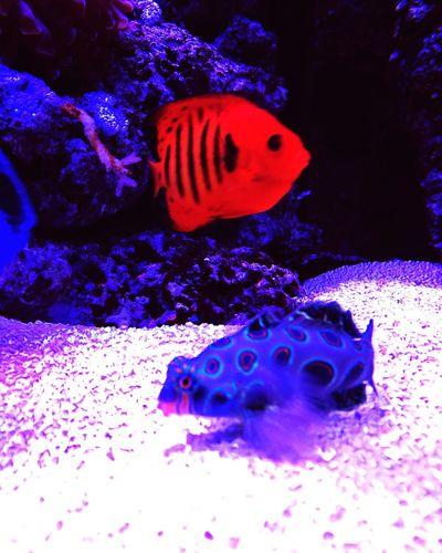 Underwater Aquarium Sea Life Water UnderSea Sea Close-up Reeftank Realreef Seafish