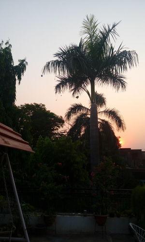 Evening. tree