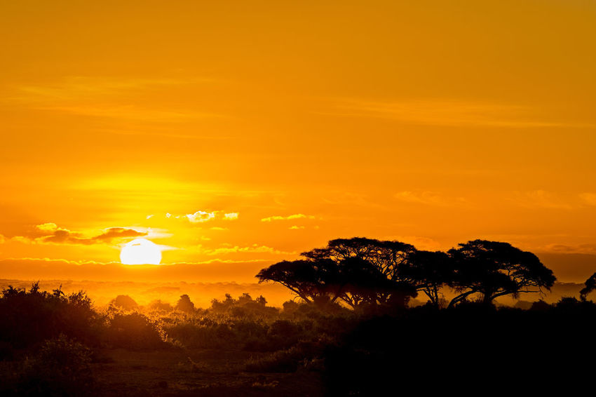 beautiful sunset at Amobseli National Park near the Kilimanjaro, Kenya Light Africa Beauty In Nature Dusk Game Reserve Growth Idyllic Landscape Nature No People Orange Color Peaceful Safari Scenics Silhouette Sky Sun Sunbeam Sunlight Sunset Sunshine Tranquil Scene Tranquility Tree Wildlife