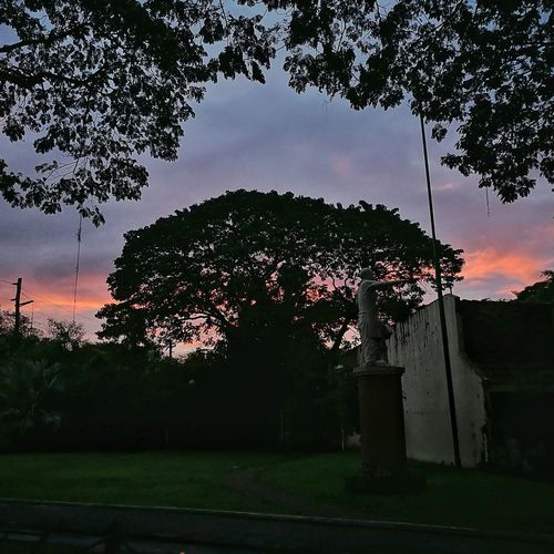 Sunset behind the Acacia trees at the Marikina Shoe Museum HuaweiP9 Marikina City Marikina Sunset Marikina Shoe Museum Streetphotography Sky