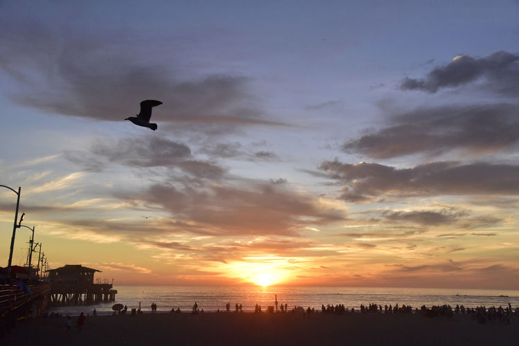 Beach Life Beach Photography Beautiful Nature Orange Sky Peaceful View Santa Monica Pier Seagulls Sunlight Unedited Photo Beauty In Nature Birds In Flight Clouds Clouds And Sky Colorful Sky Full Frame Horizon Ocean Santa Monica Beach Seabird Shore Sillhouette Sunset Tranquil Scene Warm Weather Water Over Horizon