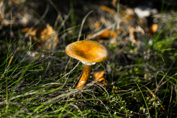 Grass Beauty In Nature Fragility Fungus Mushroom Nature Paint The Town Yellow The Week On EyeEm Lost In The Landscape