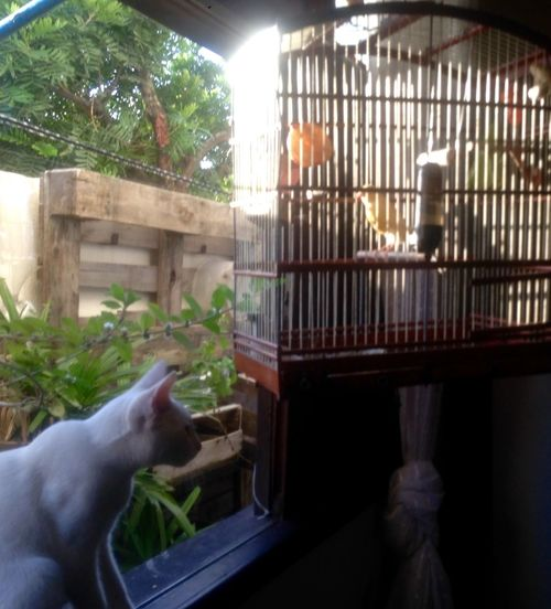 "04/08/2018 - Olaf"" nd BIRD as possible as friend Deboa CanarioBelga Gatobranco PetsdoAri"