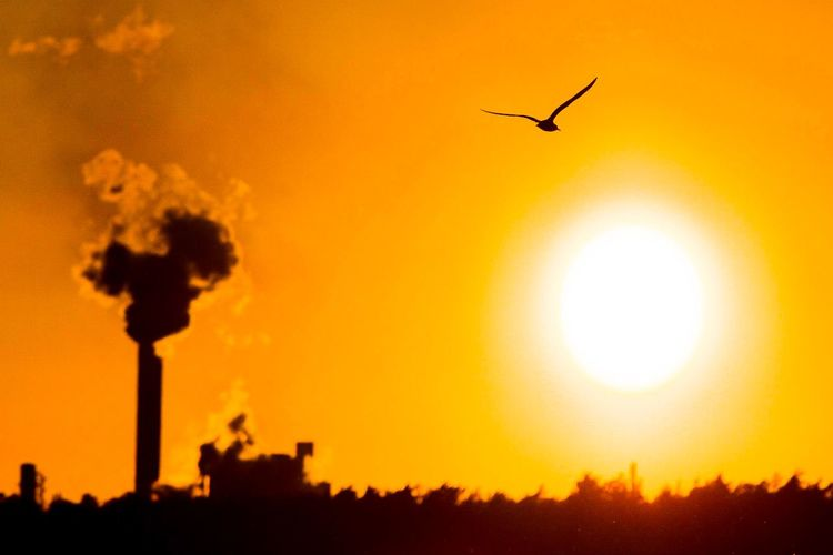 Solar Power Smoke Powerplant Seagull Clean Air Save The Nature Fossil Fuel Future Pollution Polluted Nature Solar Power Station Solar Energy Emissions Sky Sunset Orange Color Silhouette Sun Nature No People Built Structure Animals In The Wild Flying Bird Building Exterior