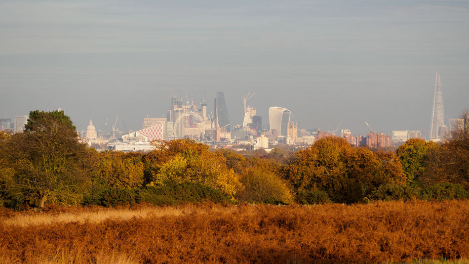View of London skyline from Sawyer's Hill in Richmond Park (TW10), London Autumn Autumn Colors London London Skyline Richmond Park, London Sawyer's Hill TW10 Architecture Autumn Colours Day Field Grass Nature No People Outdoors Sky Skyscraper Tree Postcode Postcards