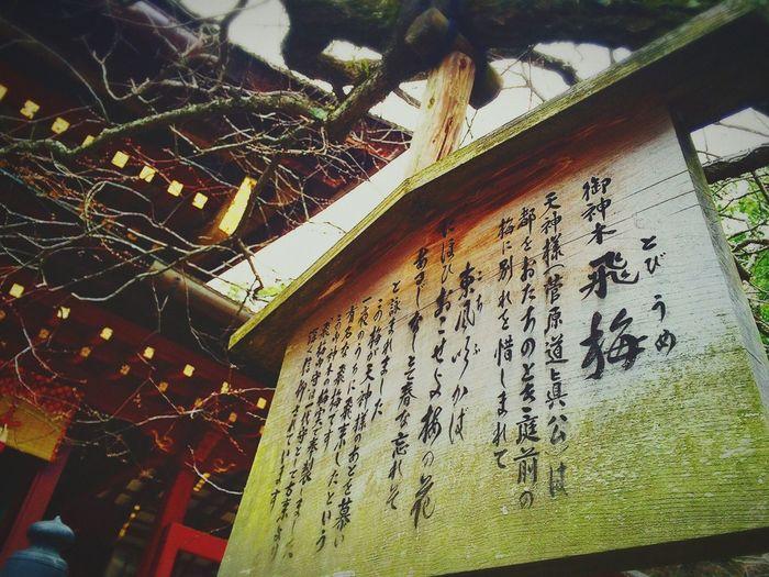 Dazaifu Tenmangu shrine on 6th Jan. 2016 Check This Out My Favorite  Shrine Taking Photos Enjoying Life Praying For World Peace Nice Day Fukuoka,Japan
