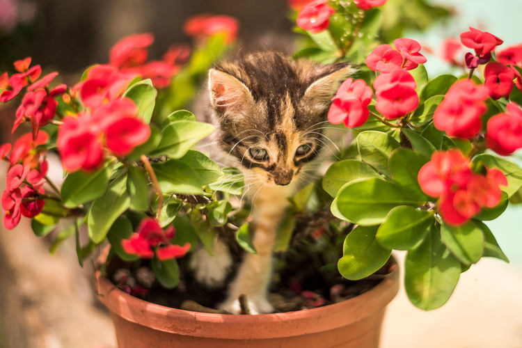 Close-up of cat on flower pot