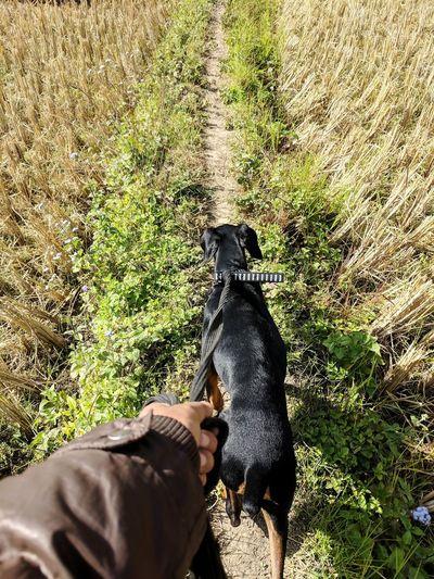 dog in hand Dog #doberman Doberman  Capture Tomorrow EyeEmNewHere Low Section Water Pets High Angle View Sand Sunlight Shadow Grass