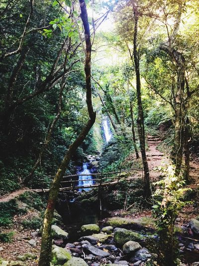 Hidden Paradise the Kabigan Falls in Pagudpud Ilocos Norte. The beautiful views on trekking to the waterfalls makes it easier. #siamdiscovery #godiscoversummer Tree Plant Growth No People Beauty In Nature Nature Summer Exploratorium