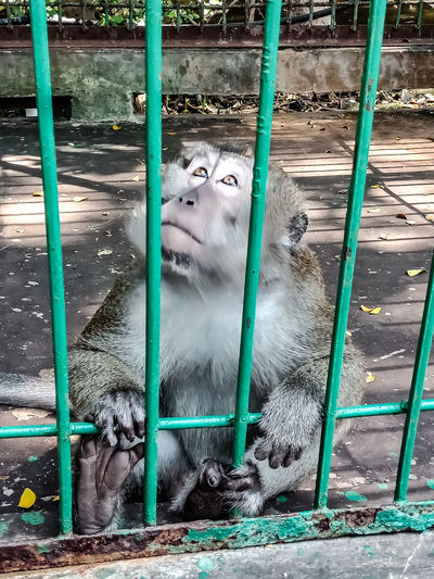 monkey in his
