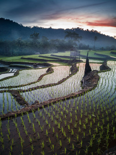 Nature Countryside Agriculture Field Pattern Rural Scene Water Landscape No People Irrigation Equipment Outdoors Rice Paddy Freshness Food Day Sky EyeEmNewHere EyeEm Ready