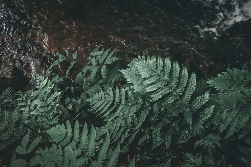 Tree Plant No