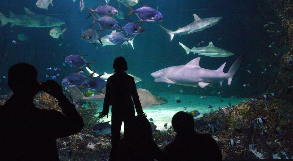 Group of fish in aquarium