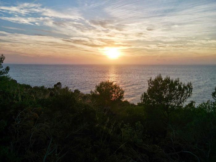 Sunset un Mallorca Water Sea Sunset Beach Sunlight Sun Tree Summer Silhouette Sky Romantic Sky Atmospheric Mood Seascape Dramatic Sky Coastline Summer Road Tripping