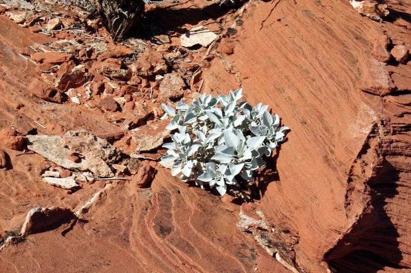 Day Desert Desert Landscape Desert Life Kiomi Collection Nature No People Plants Rocks Sand Resist!