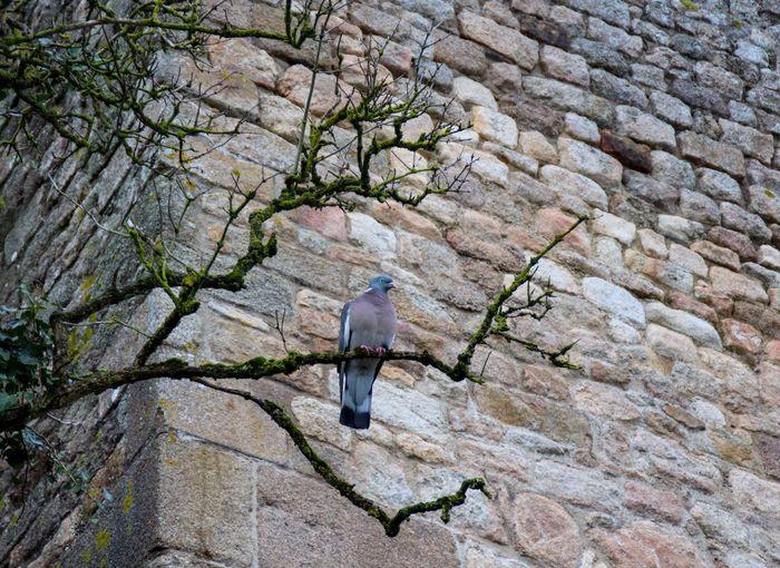 Animal Wildlife Animals In The Wild Perching Tree Nature Day Bird Of Prey