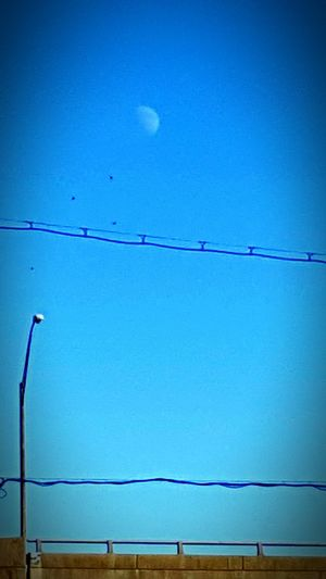 Lexington Kentucky  Moon Daytime Moon Birds Mobile Photography Zoom In Inthemoment In The Car Taking Pics While Driving