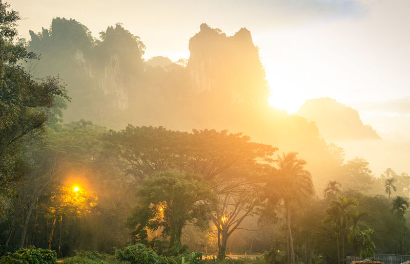 Thick wild vegetation and mountains in Khao Sok national park forest at sunset - Wanderlust travel lifestyle adventure around south east asian Thailand wonders - Enhanced sunflare halo with misty haze Adventure ASIA Bamboo Beautiful Cheow Lan Lake Discover  Dramatic Dusk Equator Excursion Filter Flora Fog Forest Green Haze Jungle Khao Landscape Morning Mountain National Natural Nature Outdoor Paradise Park Plant Rain Rainforest Sok Subtropical Sun Sunlight Sunrise Sunshine Thai Thailand Tourism Travel Tree Trip Tropical Untouched Vacation Vegetation Wander Wild Wilderness Woods