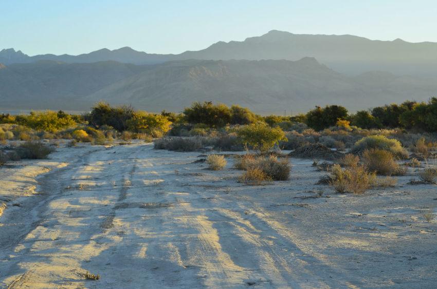 early morning sunlight illuminates tire tracks in desert landscape Desert Beauty In Nature Day Desert Landscape Landscape Mountain Nature No People Offroad Outdoors Scenics Sky Tire Tracks Tranquil Scene Tranquility