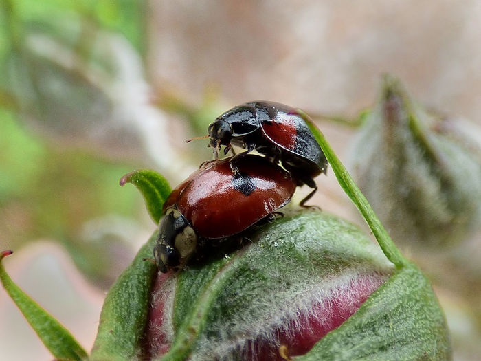 Animal Animal Antenna Animal Body Part Animal Themes Beauty In Nature Close-up Day Focus On Foreground Green Color Growth Insect Ladybug Macro Nature No People Outdoors Plant Red Selective Focus Wildlife