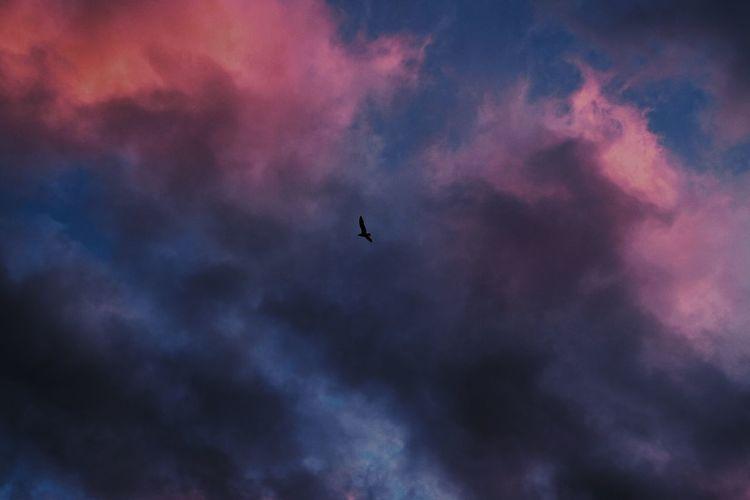 Take flight. Sea South Africa Capetown Sunset