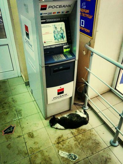 Котюня ждет зарплату