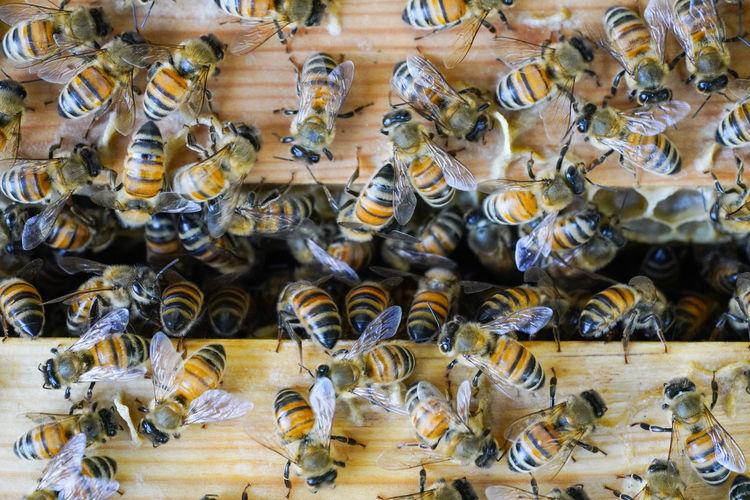 蜜蜂 Full Frame