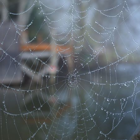 A spider Web festooned with droplets from the Fog at Triangle Lake. Getolympus